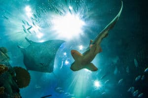 Mystic, CT Aquarium