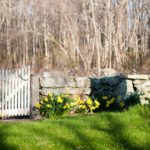 Stone Wall and Gate surrounded by daffodils at Stonecroft Country Inn in Ledyard, CT