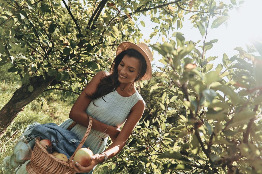 Attractive young woman picking apples and smiling while standing in apple orchards in CT