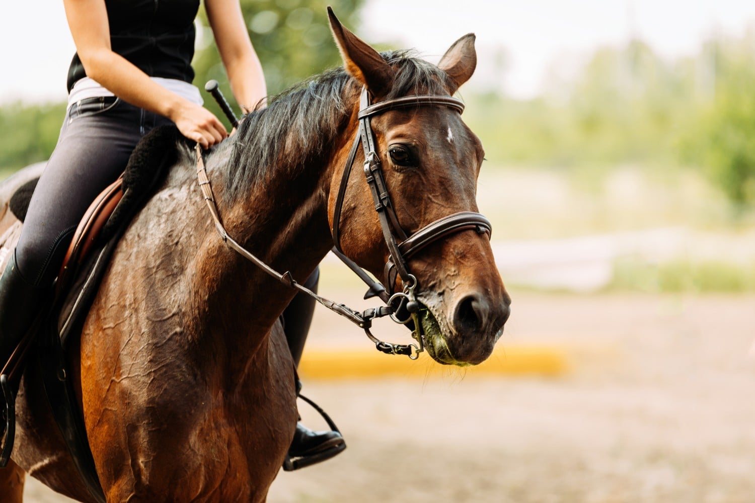 here are the top 4 places for horseback riding in ct